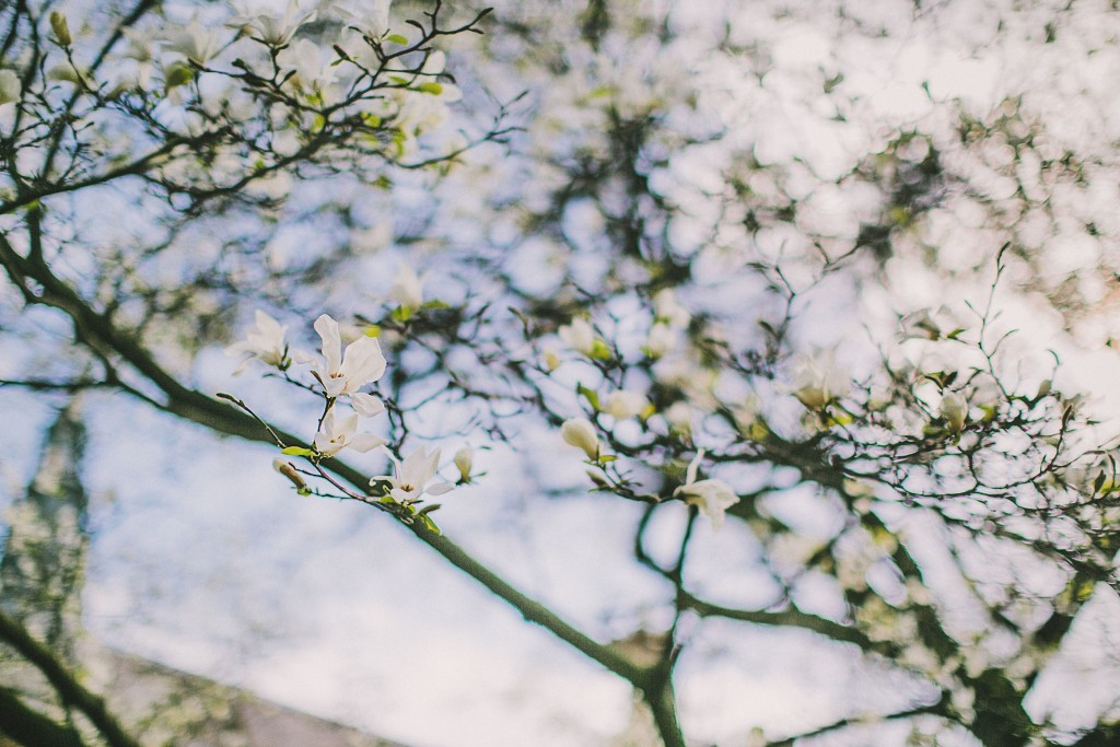 nicholas-lau-nicholau-lincolns-inns-fields-somerset-house-engagement-couple-photos-prewedding-love-london-cherry-blossum-sakura-blue-sky-white-pink-flower-photography-fine-art