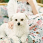 Nicholas-lau-nicholau-lifestyle-portrait-film-photography-fuji-400-contax-645-garden-girl-taiwanese-summer-sunny-floral-dress-pale-bob-hair-chinese-crested-powder-puff-fluffy-cute-dog
