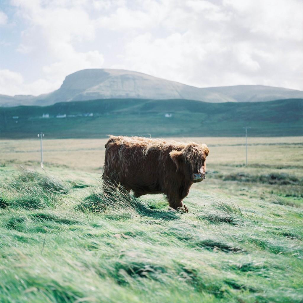 nicholas-lau_-scotland-98
