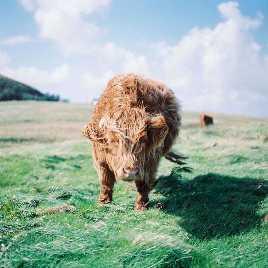 nicholas-lau_-scotland-99