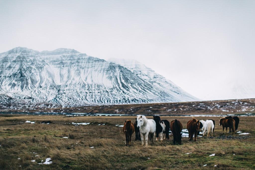 iceland-november-winter-snow-film-photography-looks-like-nicholas-lau-photo-portraits-travel-porn-wanderlust-31