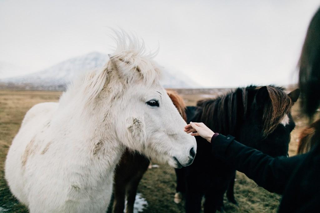 iceland-november-winter-snow-film-photography-looks-like-nicholas-lau-photo-portraits-travel-porn-wanderlust-32